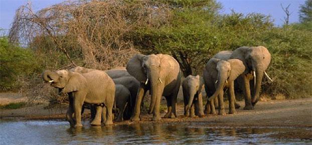 safari por la garden route - Travelling Classroom, aprende inglés en un viaje por Sudáfrica