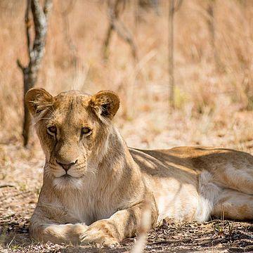 Big Cat Rescue - Programa de voluntariado en Sudáfrica y Namibia
