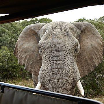 Conservation Community - Programa de voluntariado en Sudáfrica y Namibia
