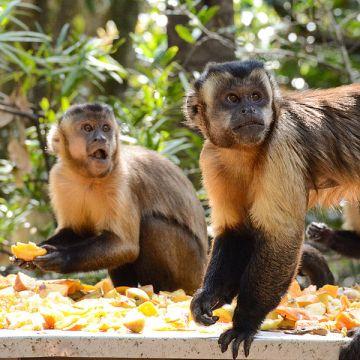 Monkey Sanctuary - Programa de voluntariado en Sudáfrica y Namibia