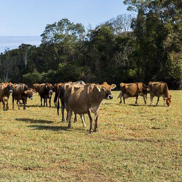 Organic Farm Experience - Programa de voluntariado en Sudáfrica y Namibia