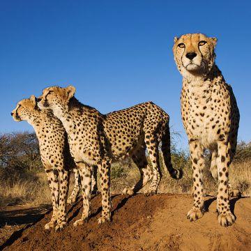 Wildlife Conservation - Programa de voluntariado en Sudáfrica y Namibia