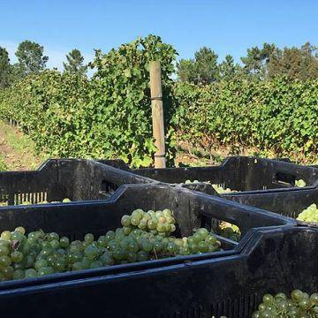 Wine Farm Experience - Programa de voluntariado en Sudáfrica y Namibia